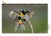 Chestnut-eared Aracari Just Landed Carry-all Pouch