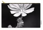 Chicory Wildflower Carry-all Pouch