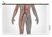 Circulatory System In Male Anatomy Carry-all Pouch