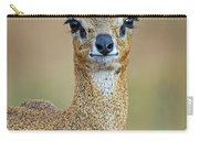 Close-up Of Klipspringer Oreotragus Carry-all Pouch
