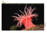 Crimson Anemone Cribrinopsis Fernaldi Carry-all Pouch