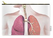 Cross Section Of Human Respiratory Carry-all Pouch