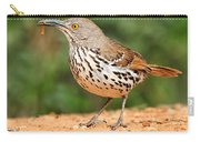 Curvedbill Thrasher With Grub Carry-all Pouch