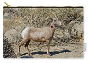 Desert Bighorn Sheep Ewe With Radio Carry-all Pouch