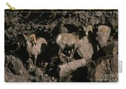 Desert Bighorns Ovis Canadensis Nelsoni Carry-all Pouch