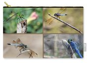 Dragonfly Collage 3 Carry-all Pouch