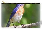 Eastern Bluebird - After His Bath Carry-all Pouch