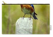 Eastern Bluebird Pose Carry-all Pouch