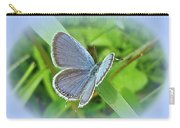 Eastern-tailed Blue Butterfly - Cupido Comyntas Carry-all Pouch