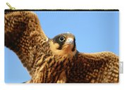 Eurasian Hobby Falco Subbuteo In Carry-all Pouch