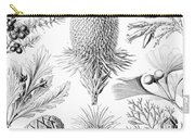 Examples Of Coniferae From Kunstformen Carry-all Pouch by Ernst Haeckel