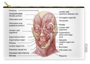 Facial Muscles Of The Human Face Carry-all Pouch
