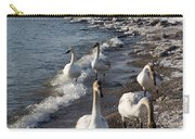 Family Walk On The Beach - Wild Trumpeter Swans Lake Ontario Toronto Carry-all Pouch