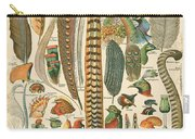 Feather Plumes-a Carry-all Pouch