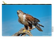 Ferruginous Hawk About To Take Carry-all Pouch