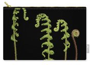 Fiddlehead Ferns Carry-all Pouch