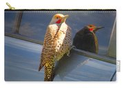 Yellow Shafted Northern Flicker Hanging Around Carry-all Pouch