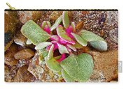 Fuzzy Plant On Blue Mesa Trail In Petrified Forest National Park-arizona  Carry-all Pouch