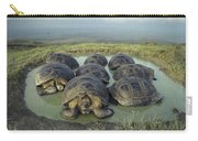 Galapagos Giant Tortoises Wallowing Carry-all Pouch