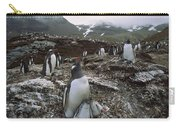 Gentoo Penguin And Chicks South Georgia Carry-all Pouch