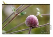 Globe Flower Bud Before The Bloom Carry-all Pouch