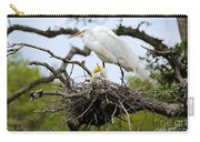 Great Egret Chicks - Sibling Rivalry Carry-all Pouch by Carol Groenen
