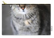 Grey Cat Portrait Carry-all Pouch by Elena Elisseeva