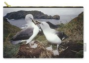 Grey-headed Albatrosses Courting Carry-all Pouch