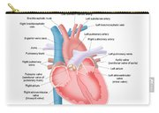 Heart Anatomy Carry-all Pouch