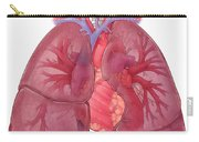 Heart Illustration, With Pulmonary Veins Carry-all Pouch
