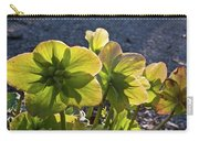 Helleborus Backlight Blossoms 2 Carry-all Pouch