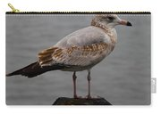 Immature Glaucous Gull Carry-all Pouch