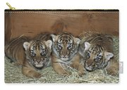 Indochinese Tiger Cubs In Sleeping Box Carry-all Pouch