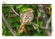 Juvenile Oriole Carry-all Pouch