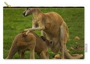 Kangaroo Nursing Its Joey Carry-all Pouch