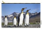 King Penguins St Andrews Bay South Carry-all Pouch