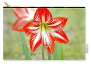 Lensbaby 2 Orange Red And White Amaryllis Blooms Carry-all Pouch
