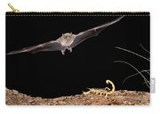 Lesser Long-nosed Bat Approaching Carry-all Pouch