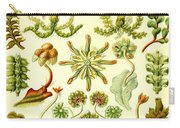 Liverworts Moss Brunnenlebermoos Haeckel Hepaticae Carry-all Pouch