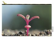 Livingstone Daisy Carry-all Pouch by Ciabou Hany