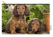 Long-haired Dachshunds Carry-all Pouch