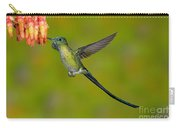 Long-tailed Sylph Carry-all Pouch