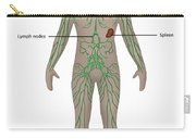 Lymphatic System In Male Anatomy Carry-all Pouch