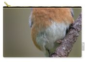 Male Eastern Bluebird With Spider Carry-all Pouch