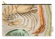 Marine Fauna Carry-all Pouch