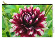 Maroon And White Dahlia Flower In The Garden Carry-all Pouch