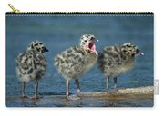 Mew Gull Three Chicks Carry-all Pouch by Tom Vezo
