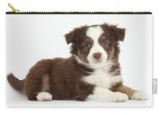 Miniature American Shepherd Puppies Carry-all Pouch