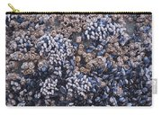 Mussels And Barnacles, Low Tide Carry-all Pouch
