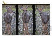 Curious Yearling Deer Carry-all Pouch
